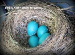 Robin's%20egg%20nest
